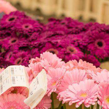 Snijbloemen groothandel Sneek
