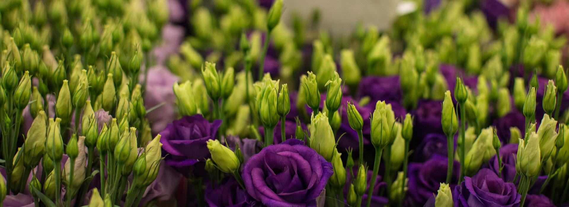 Snijbloemen Brandsma bloemen